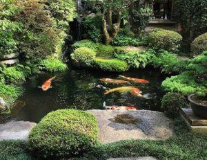 Inspirasi Membuat Kolam Ikan di Halaman Rumah